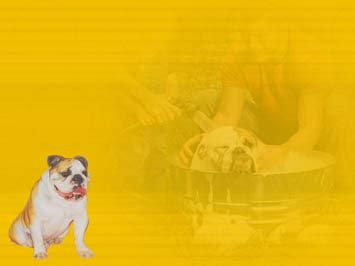 Pets - Dogs 03 PowerPoint Template