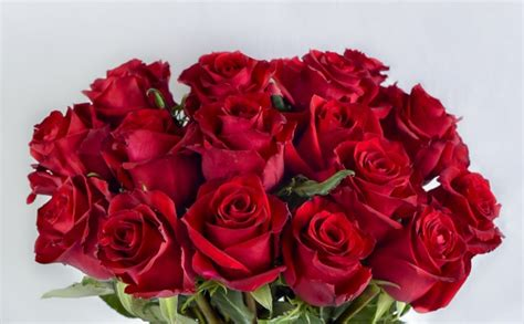 Gorgeous Kenyan Red Roses via Optimal Connection this