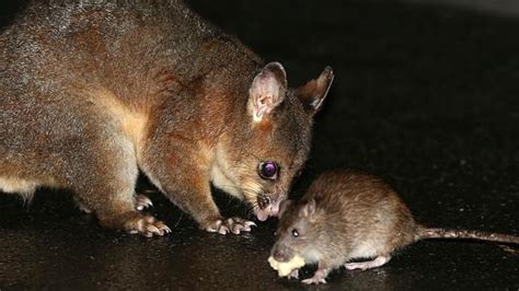 PEST CONTROL EASTERN SUBURBS   CONTACT US NOW