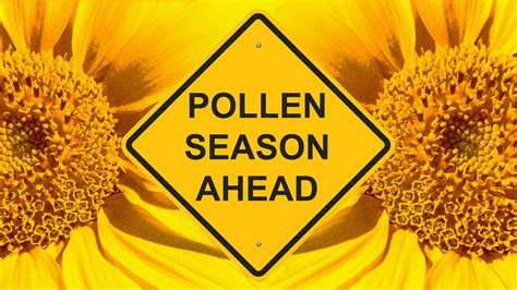 As the Forest Moves Back In, Pollen Is on the Rise in Detroit