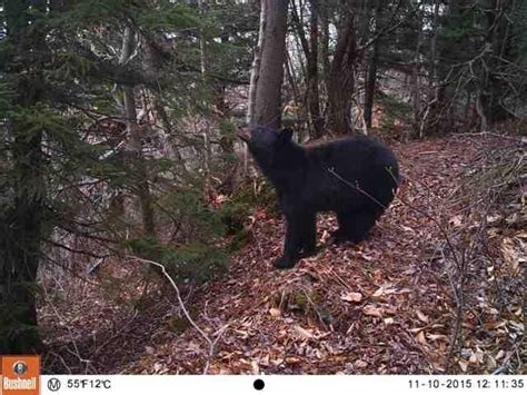 State Deploys Cameras Into National Forest To Study How
